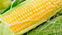 Кукурузная каша для похудения: отзывы. Кукурузная каша: рецепт