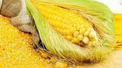 Кукурузная крупа: полезные свойства, рецепты приготовления