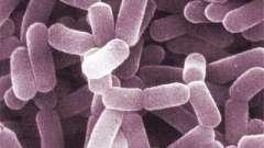 Lactobacillus spp: норма у женщин. Что такое lactobacillus spp