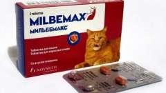 """Лечение гельминтозов: препарат """"мильбемакс"""" для кошек"""