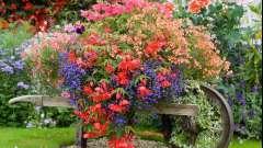 Лучшие цветы для уличных вазонов