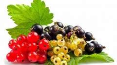 Лучшие сорта смородины черной, красной и белой