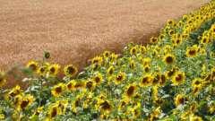 Лучший способ поддержания плодородия полей