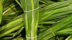«Луковое счастье»: отзывы. Выращивание лука в домашних условиях