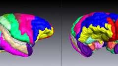 Методы анатомии человека. Методы исследования анатомии