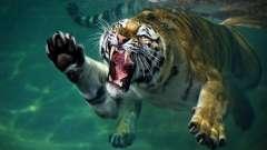 Международный день защиты животных - праздник для тех, кто не равнодушен к братьям нашим меньшим