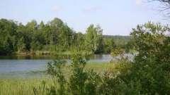 Мичуринское озеро: описание, рыбалка, отдых