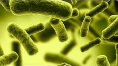 Микрофлора кишечника: восстановление, препараты, список, инструкция по применению и отзывы