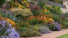 Многолетние цветы неприхотливые для сада (фото)