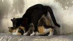Момент, когда кастрировать кота: важно не упустить