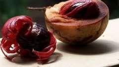 Мускатный орех. Польза и вред известной приправы