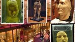 Музей медицинской истории мюттера, пенсильвания: история, экспонаты, фото