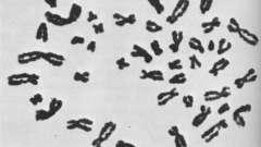 Мужские хромосомы. Y-хромосома на что оказывает влияние и за что отвечает?