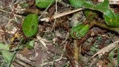На дачном участке появились муравьи? Чего боятся они и нужно ли с ними бороться?
