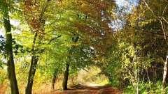 Начинающему художнику: как нарисовать осенний лес