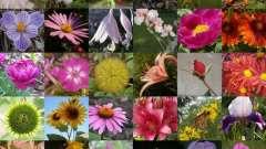 Название цветов для букетов: делаем цветущие композиции на даче