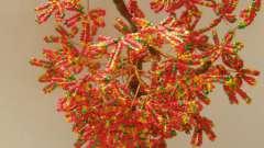 Небольшое осеннее дерево из бисера: схема, описание, мастер-класс для начинающих