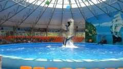 """""""Немо"""", дельфинарий в джубге: такого шоу дельфинов вы еще не видели!"""