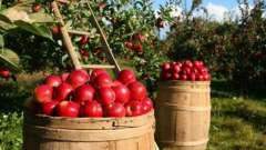 Необходимые удобрения для яблони осенью