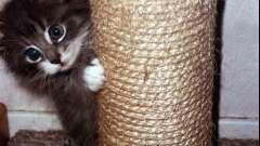 Несколько слов о том, как кота приучить к когтеточке