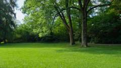 Низкорослые газонные травы. Семена газонных трав, цена. Газонная трава, которая уничтожает сорняки