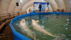 Новые дельфинарии. В перми открылся передвижной дельфинарий