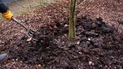 Обработка деревьев осенью. Опрыскивание деревьев осенью