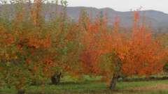 Обработка плодовых деревьев осенью от вредителей и болезней