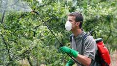 Опрыскивание плодовых деревьев осенью защитит будущий урожай