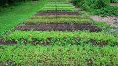 Органическое земледелие: с чего начать? Природное земледелие