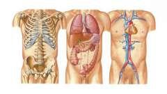 Организм человека: схема. Какие науки изучают организм человека?