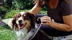 Ошейники для собак от клещей. Особенности применения