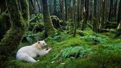 Отличие, примеры и связь живой и неживой природы