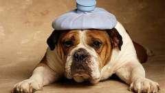 Отравление у собак: симптомы и последствия