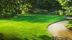 Озеленение участка. Озеленение территории. Проект озеленения