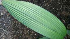 Параллельное жилкование: особенности строения растений