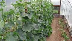 Парник для огурцов: как правильно вырастить вкусные плоды