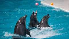 Передвижной дельфинарий в иркутске