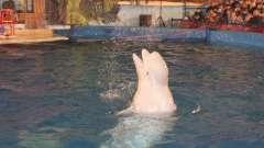Передвижной дельфинарий в уфе