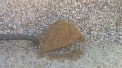 Песчано-щебеночная смесь: характеристики