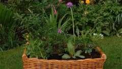 «Плетеные» идеи для сада и огорода: своими руками украшаем участок