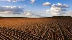 Плодородие - что такое? Что такое плодородие почвы?