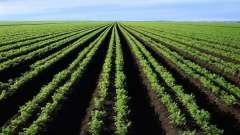 Плодородная почва - залог богатого урожая