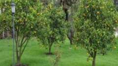 Плодовые деревья и кустарники. Плодово-ягодные деревья и кустарники