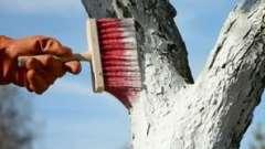 Побелка деревьев осенью: зачем и как это делать