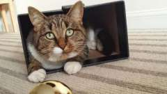 Почему кошки так сильно любят коробки?