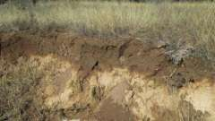 Почвенные горизонты - слои почв, возникающие в процессе почвообразования