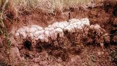 Почвы каштановые, их свойства и классификация