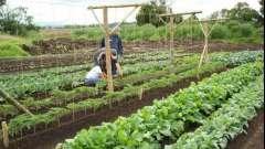 Подарите сами себе чудо-огород, используя метод митлайдера