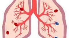 Подробно о том, в каких органах кровь насыщается кислородом
